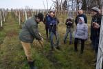 Uprawa winorośli na Opolszczyźnie