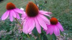 Cykl szkoleń z zakresu ziół, kwiatów jadalnych i roślin miododajnych za nami .....