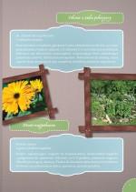 Zioła i kwiaty jadalne w kuchni - broszura