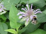 Racjonalne żywienie i  zdrowy styl życia z zastosowaniem roślin zielarskich w gospodarstwie domowym